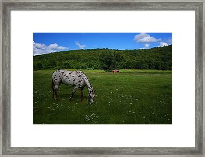 Grazing Framed Print by Karol Livote