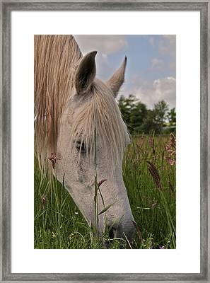 Grazing Framed Print by Odd Jeppesen