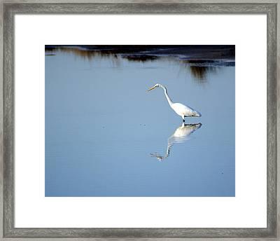 Great Blue 2 Framed Print by Marty Koch