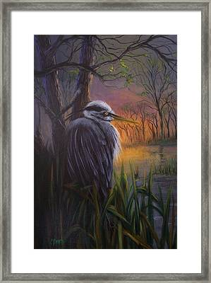 Great Blue At Sunset Framed Print by Colleen Birch