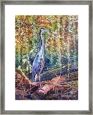 Great Blue Heron Framed Print by Hailey E Herrera