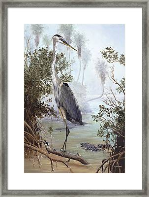 Great Blue Heron Framed Print by Kevin Brant