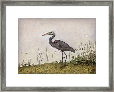 Great Blue Heron Framed Print by Lorrie Cerrone