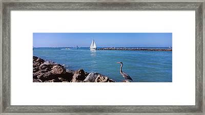 Great Blue Heron Perching On A Rocks Framed Print by Panoramic Images