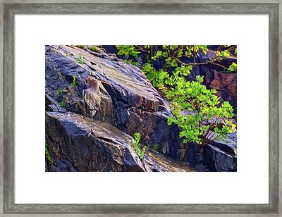 Great Blue Heron Framed Print by Rick Berk