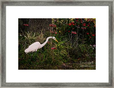 Great Egret In The Garden Framed Print by Zina Stromberg
