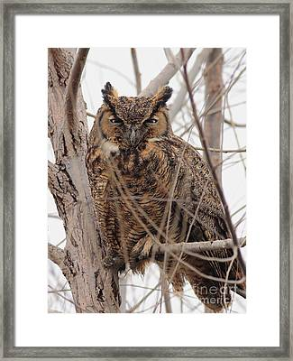 Great Horned Owl Perched Framed Print by Wingsdomain Art and Photography