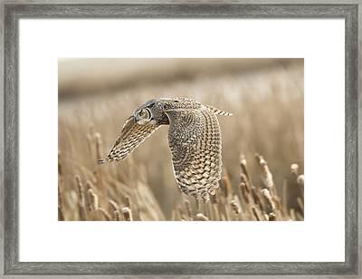 Great Horned Owl Framed Print by Peter Stahl