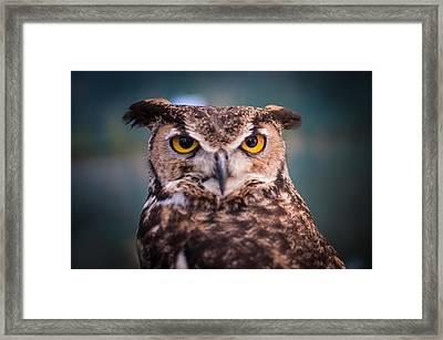 Great Horned Owl Framed Print by Ralph Vazquez