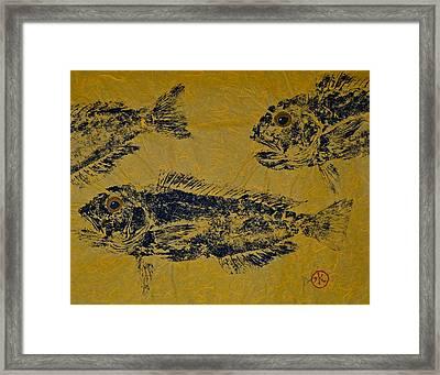Great Northern Tilefish - Golden Tilefish 1 Framed Print by Jeffrey Canha