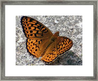 Great Spangled Fritterlary Framed Print by Dave Martsolf