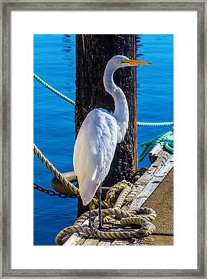 Great White Heron Framed Print by Garry Gay