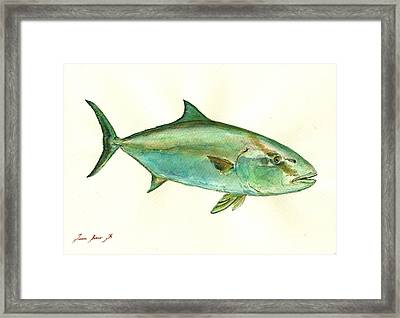 Greater Amberjack Fish Framed Print by Juan  Bosco