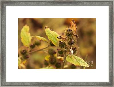 Greater Burdock 1 Framed Print by Marcin Rogozinski