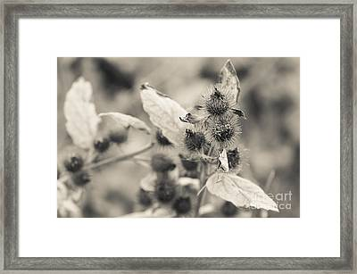 Greater Burdock 2 Framed Print by Marcin Rogozinski
