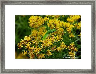 Green Anole Hiding In Golden Rod Framed Print by Barbara Bowen