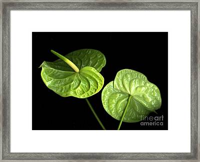 Green Berets Framed Print by Christian Slanec
