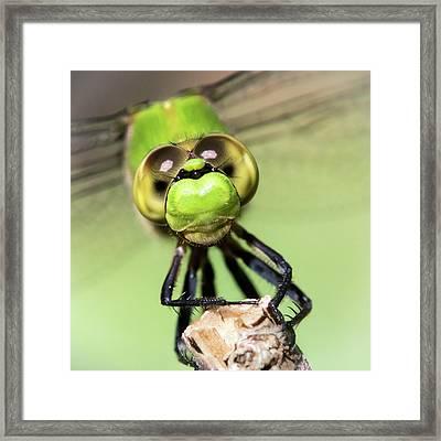 Green Dragonfly Face Framed Print by Jim Hughes