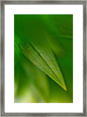 Green Edges Framed Print by Az Jackson