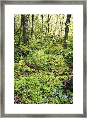 Green Foliage On The Forest Floor Framed Print by Craig Tuttle