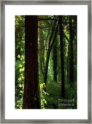 Green Forest Framed Print by Carlos Caetano