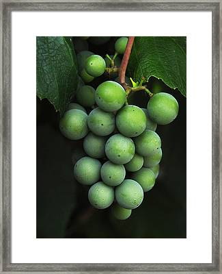 Green Grapes Framed Print by Marion McCristall
