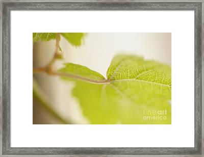 Green Grapevine Leaf Framed Print by Sami Sarkis
