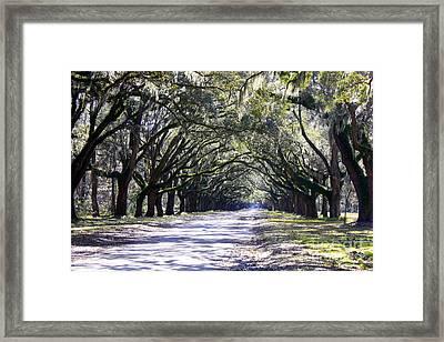 Green Lane Framed Print by Carol Groenen