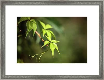 Green Leaf Framed Print by Cindy Grundsten