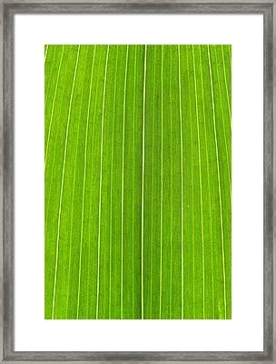 Green Leaf Framed Print by Frank Tschakert