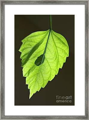 Green Leaf Framed Print by Tony Cordoza