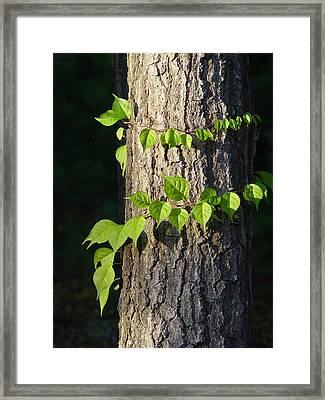 Green Leaves At Walden Pond Framed Print by Christina Solstad