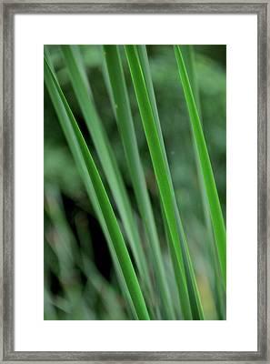 Green Lines Framed Print by Odd Jeppesen