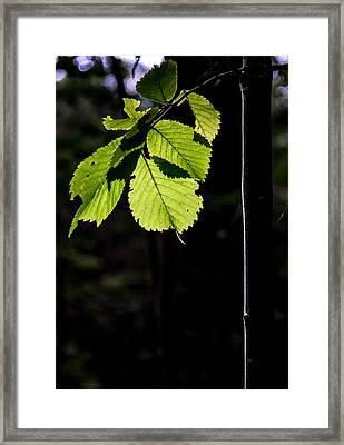 Green Framed Print by Odd Jeppesen
