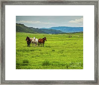 Green Pastures Framed Print by Jon Burch Photography