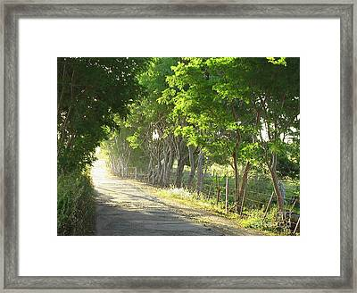 Green Path Framed Print by Barbara Marcus