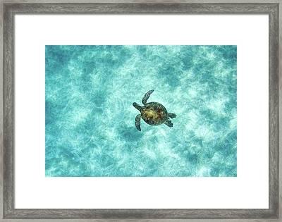 Green Sea Turtle In Under Water Framed Print by M.M. Sweet