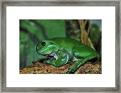 Green Tree Frog With A Smile Framed Print by Kaye Menner