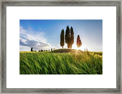 Green Tuscany Framed Print by Evgeni Dinev