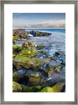 Greenery In Coral Cove Framed Print by Andres Leon