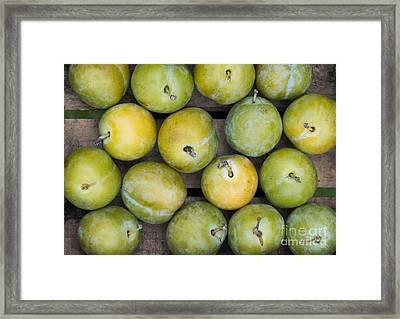 Greengage Harvest Framed Print by Tim Gainey