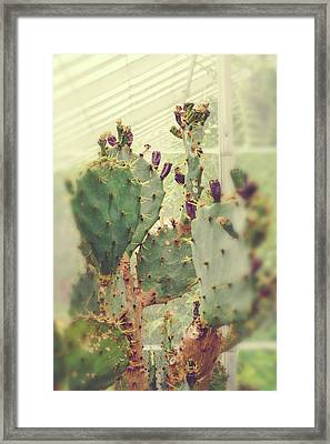 Greenhouse Cactus Framed Print by Joy StClaire