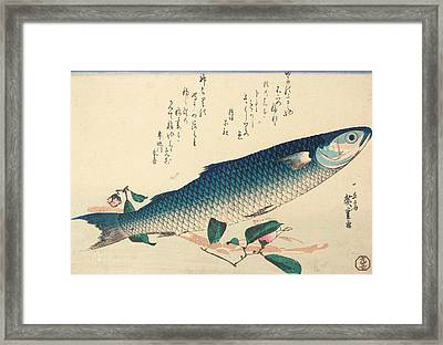Grey Mullet, Camellia And Udo Framed Print by Hiroshige