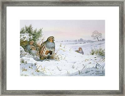 Grey Partridge Framed Print by Carl Donner
