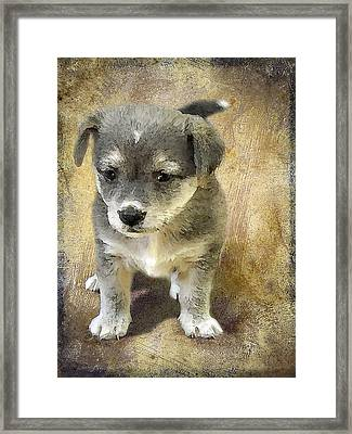 Grey Puppy Framed Print by Svetlana Sewell