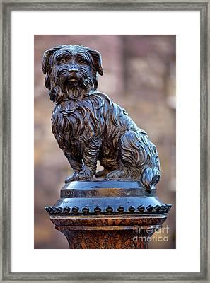 Greyfriars Bobby Framed Print by Andre Goncalves