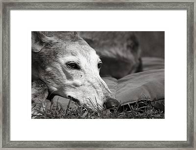Greyful Framed Print by Angela Rath