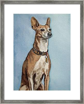 Greyhound Commission Painting By Irina Sztukowski Framed Print by Irina Sztukowski