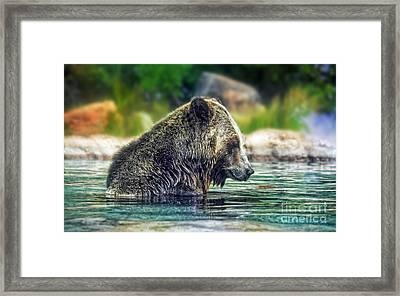 Grizzly Bear Enjoying A Dip In The Water  Framed Print by Jim Fitzpatrick