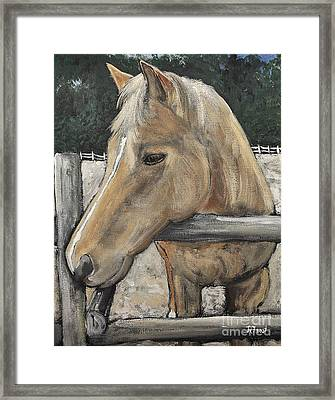 Groovey The Horse Framed Print by Reb Frost